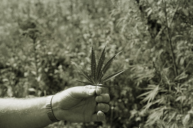 Canada's History Of Cannabis